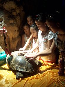 220px-Sacred_turtle_in_China